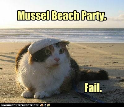 beach,captions,Cats,FAIL,muscle,mussel,ocean,Party