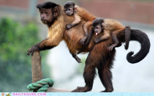 Babies,capuchins,mommy,monkey,squee