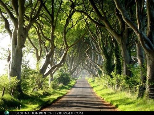 europe,Ireland,road,road trip,woods