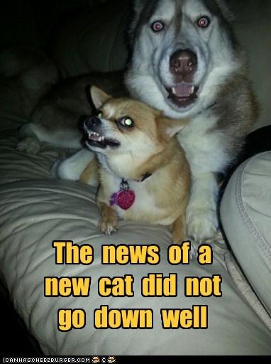 dogs,husky,huskie,chihuahua,cat,bad news,shock