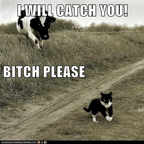 I WILL CATCH YOU! BITCH PLEASE