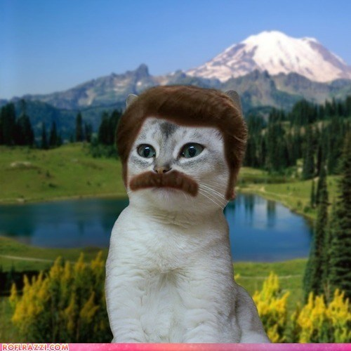 cat,Cats,funny,mustaches,Nick Offerman,parks and rec,parks and recreation,photoshopped,ron swanson,shoop,TV