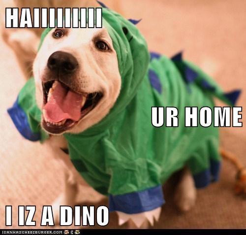 dogs,labrador,dino,costume,welcome home,happy dog,dinosaur