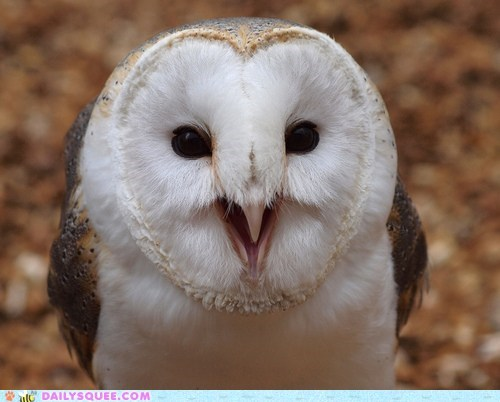 Heart Faced Owl