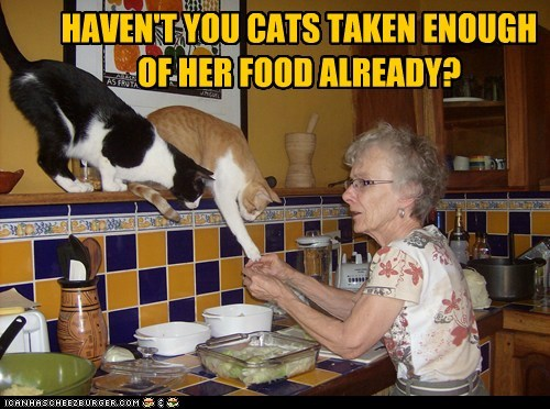 HAVEN'T YOU CATS TAKEN ENOUGH OF HER FOOD ALREADY?