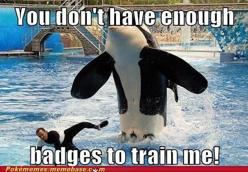 animals,badges,IRL,splash,trainer,whale