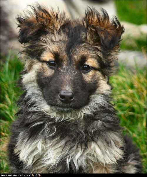 bad hair day,cyoot puppy ob teh day,dogs,Fluffy,puppy,wet,what breed