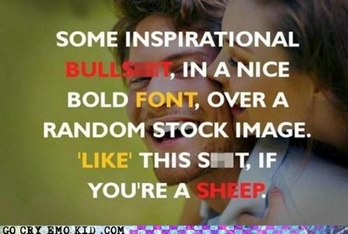 inspirational,like dis,sheep