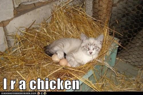 I r a chicken
