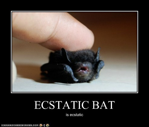 ECSTATIC BAT