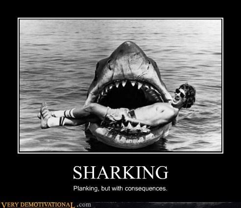 bad idea,jaws,Planking,sharking,wtf