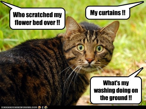 captions,Cats,curtains,flower bed,guilty,wash