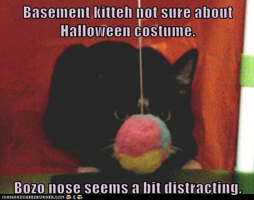Basement kitteh not sure about Halloween costume.  Bozo nose seems a bit distracting.