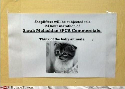 aspca,dogs,kitten,sad kitten,Sarah McLachlan