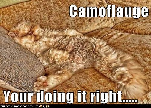 Camoflauge  Your doing it right.....