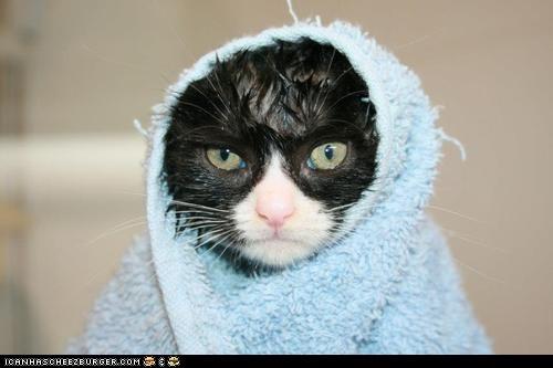 bathing,baths,Cats,cyoot kitteh of teh day,grumpy,kitten,not happy,towels,wet