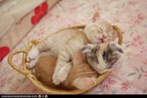 baskets,Cats,cyoot kitteh of teh day,kitten,piles,sleeping