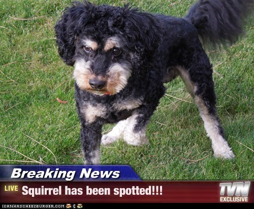 Breaking News - Squirrel has been spotted!!!