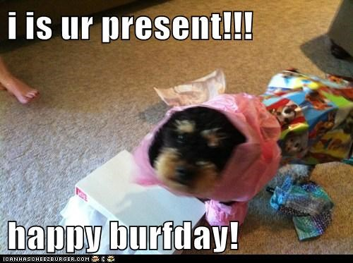 i is ur present!!!  happy burfday!
