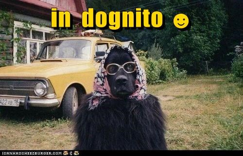 in  dognito ☻