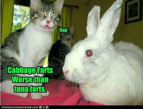 cabbage,captions,Cats,fart,gag,gross,poot,rabbit,tuna