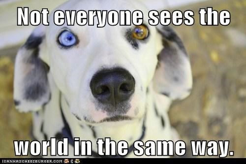 dogs,dalmatian,heterochromia,point of view,eyes