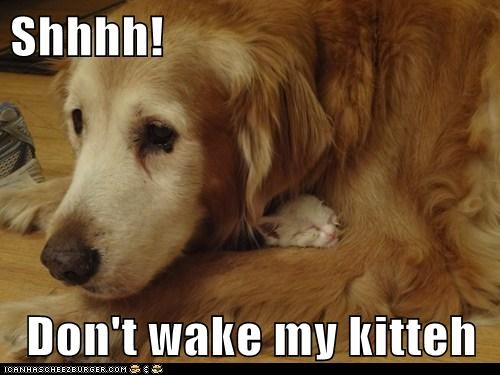 Shhhh!  Don't wake my kitteh