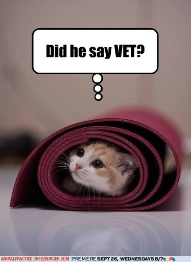 animal practice,captions,Cats,promotions,vet,vets,yoga mats