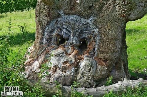 lookalike,nature,Owl,tree
