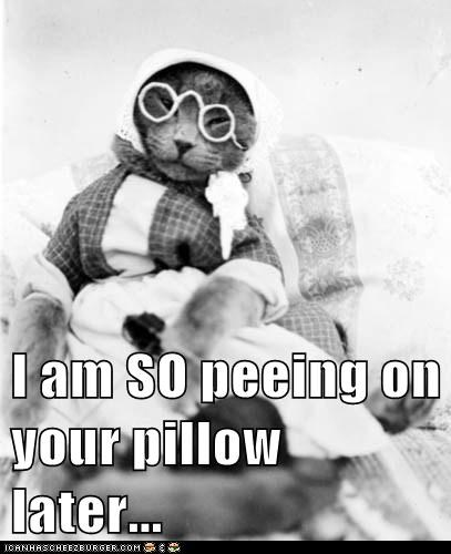 I am SO peeing on your pillow later...