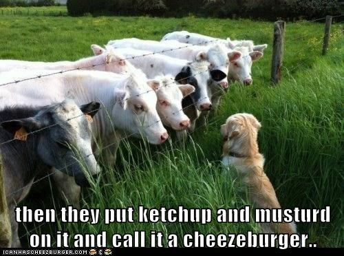 then they put ketchup and musturd on it and call it a cheezeburger..
