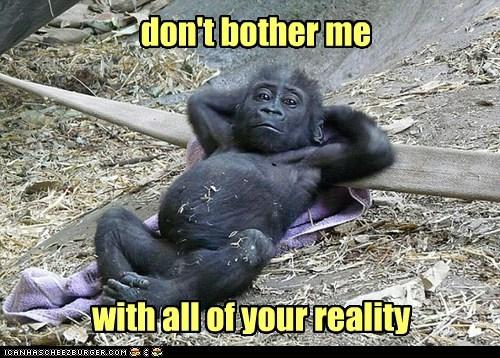 Gorillas just wanna have fun