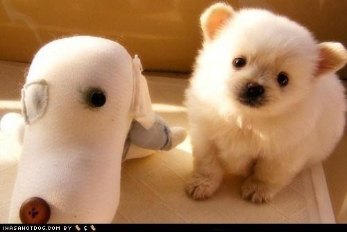 cyoot puppy ob teh day,dogs,Plushie,pomeranian,puppy,stuffed animal