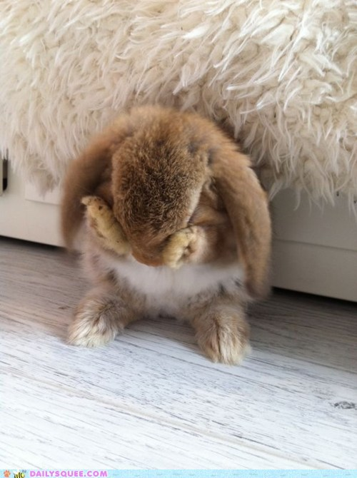 Bunday,bunny,happy bunday,hide and seek,rabbit