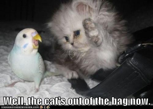 parakeet,bird,cat,expression,bag