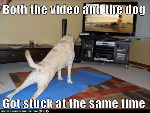 Why dogs shouldn't do yoga unsupervised...