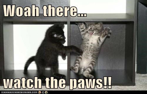 Woah there...  watch the paws!!