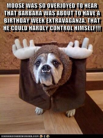 MOOSE WAS SO OVERJOYED TO HEAR THAT BARBARA WAS ABOUT TO HAVE A BIRTHDAY WEEK EXTRAVAGANZA, THAT HE COULD HARDLY CONTROL HIMSELF!!!