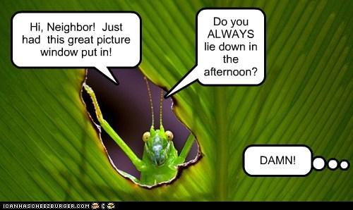 grasshopper,neighbor,picture window,lie down,privacy,alwasy,hi,annoying
