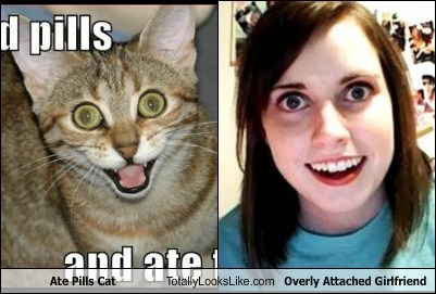 Ate Pills Cat Totally Looks Like Overly Attached Girlfriend