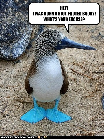 blue-footed boobies,bird,feet,born,whats-your-excuse,insult