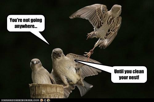 birds,nest,parents,clean your room,grabbing