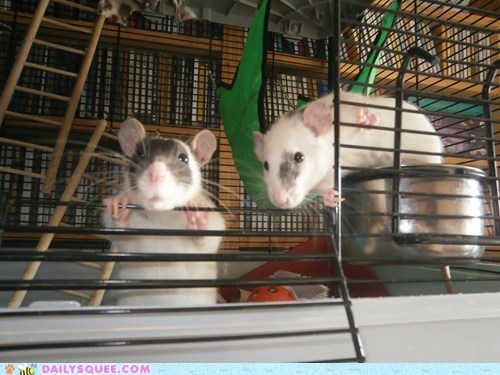 Reader Squee: Bandit and Eggy Soo