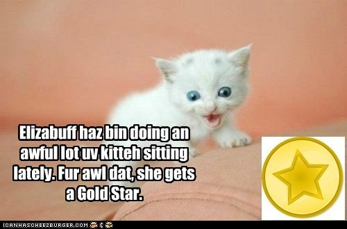 Gold Star kitteh appreciates Elizabuff's cat sitting