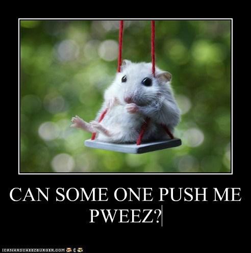 hamster,swing,push,waiting,cute,lolz