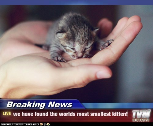Breaking News - we have found the worlds most smallest kitten!
