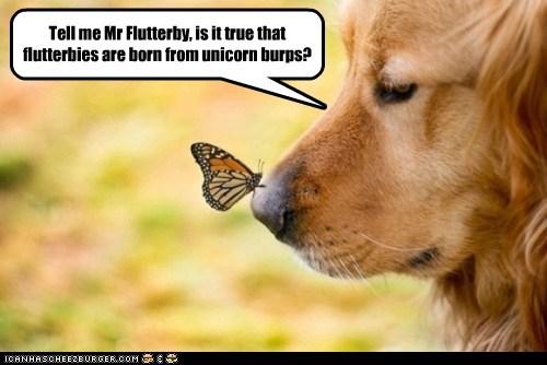 dogs,golden retriever,butterfly,unicorn,burps,nose