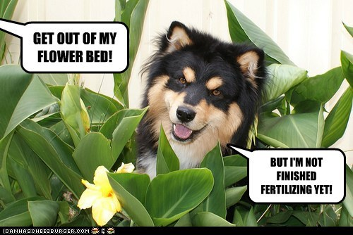 GET OUT OF MY FLOWER BED!