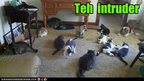 Teh  intruder
