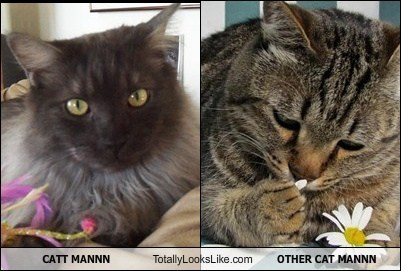 CATT MANNN Totally Looks Like OTHER CAT MANNN